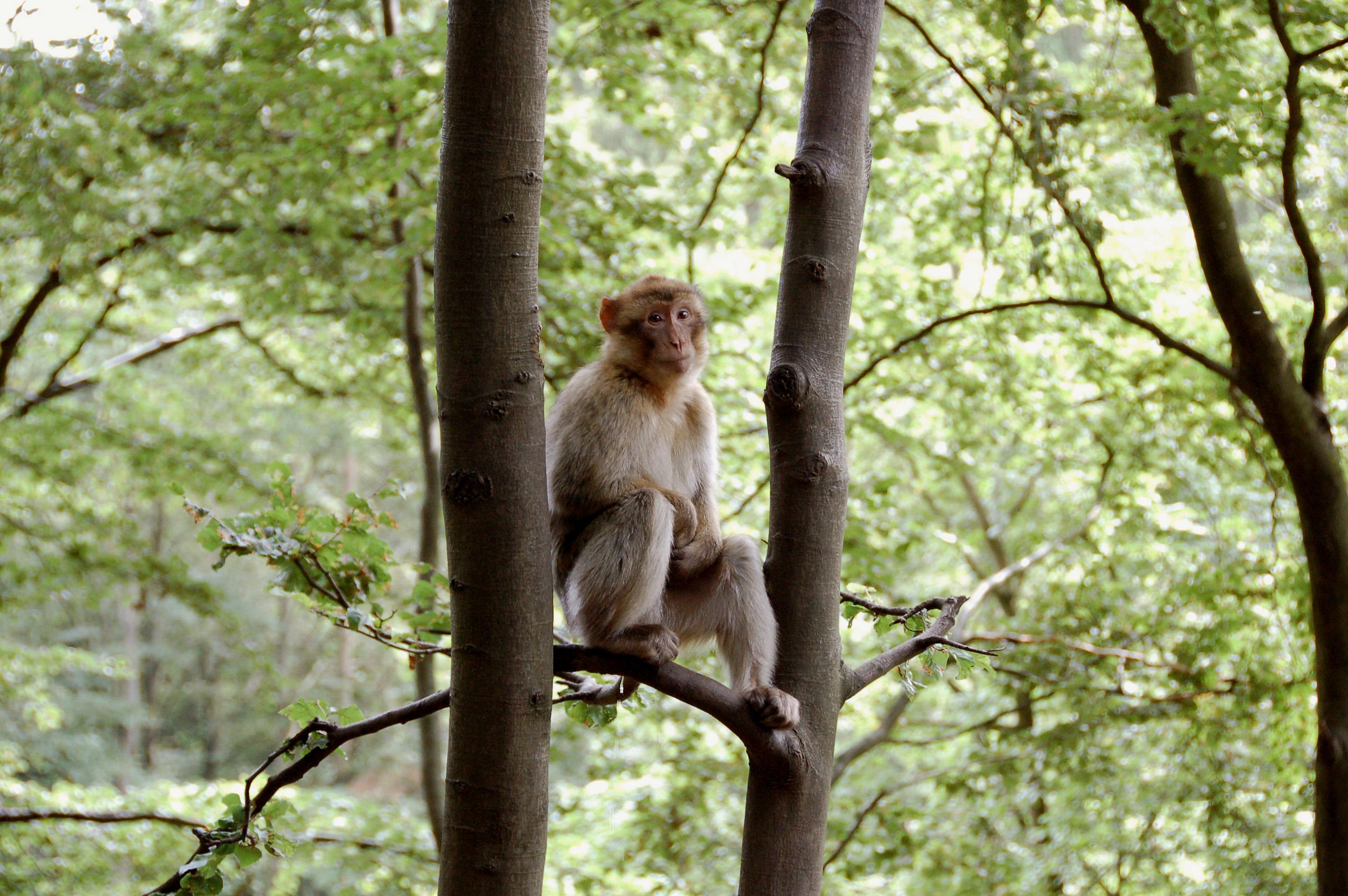 het wildpark daun